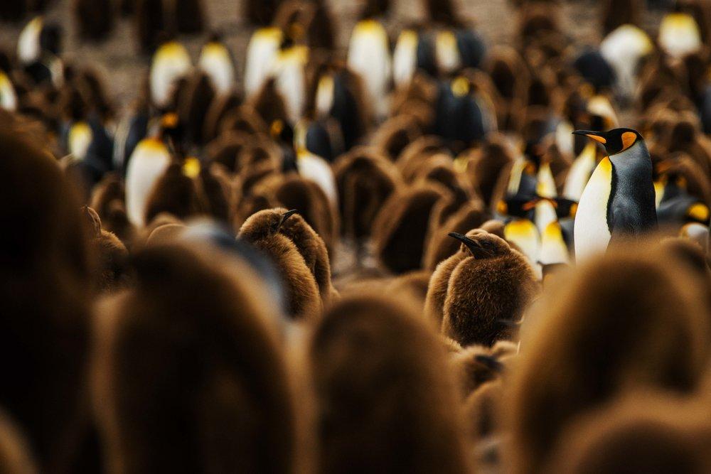 Loveandadventurephotography-Antarctica-734.jpg