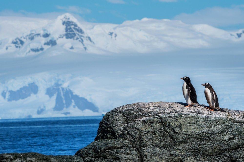 Loveandadventurephotography-Antarctica-732.jpg