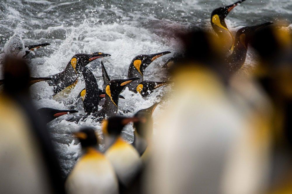 Loveandadventurephotography-Antarctica-736.jpg