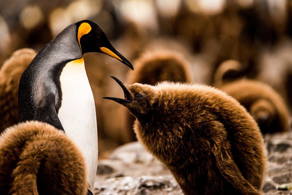 Loveandadventurephotography-Antarctica-740.jpg