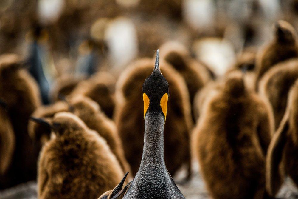 Loveandadventurephotography-Antarctica-739.jpg