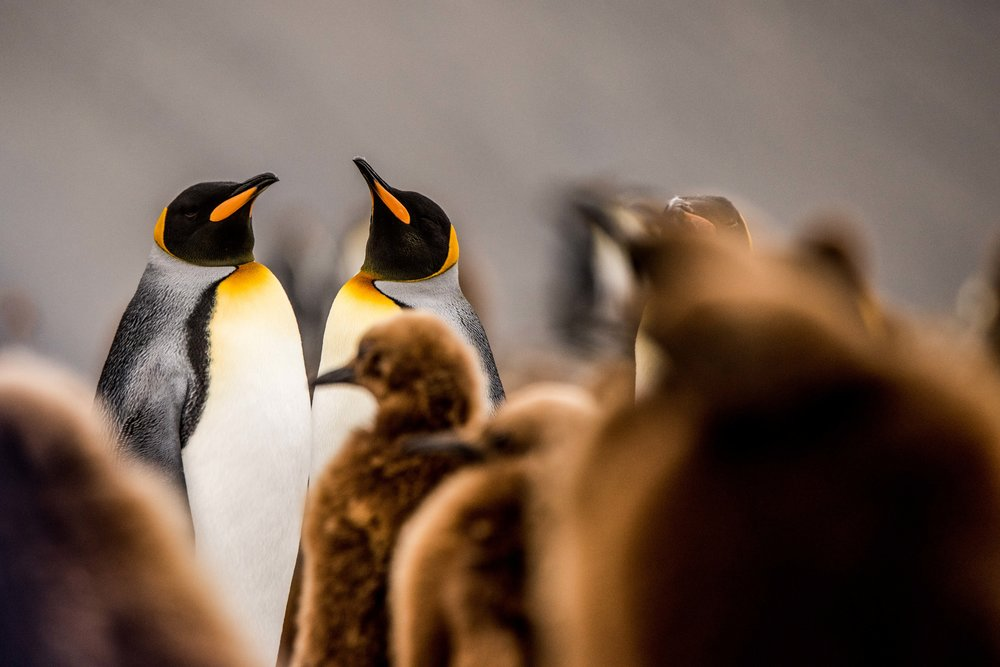 Loveandadventurephotography-Antarctica-741.jpg