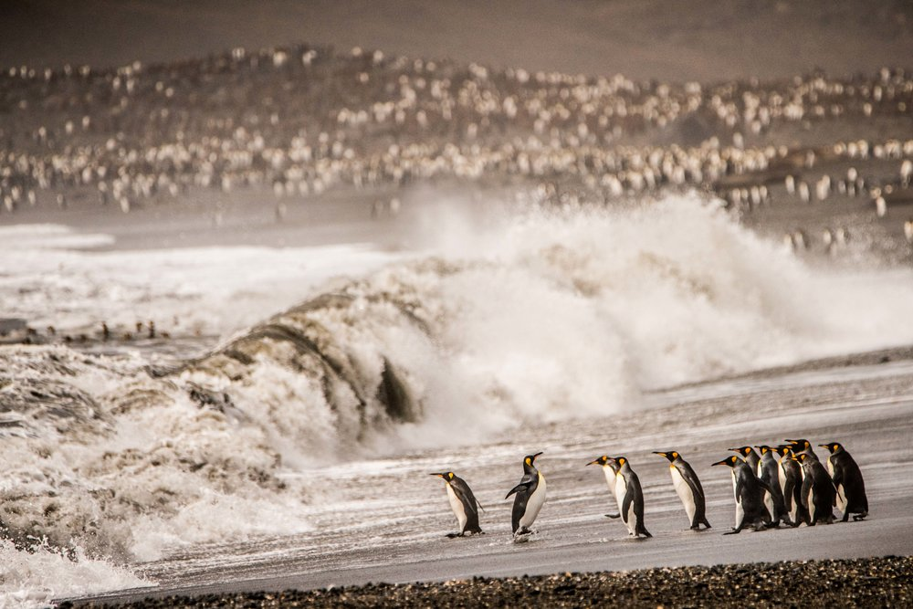 Loveandadventurephotography-Antarctica-742.jpg