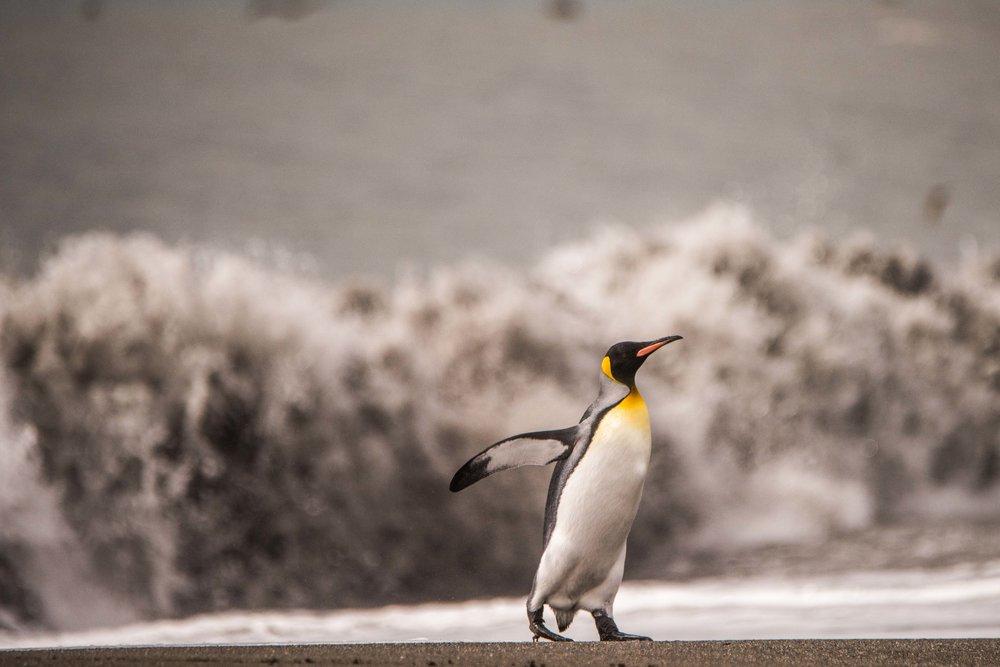 Loveandadventurephotography-Antarctica-743.jpg