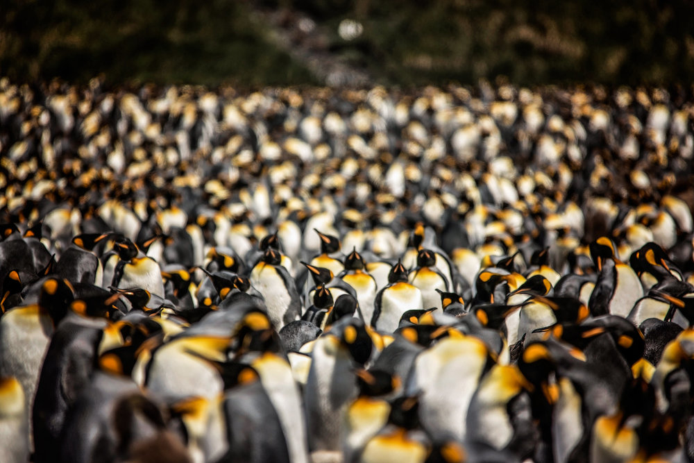 KathleenHertelPhotography-AntarcticaPenguins-81.JPG