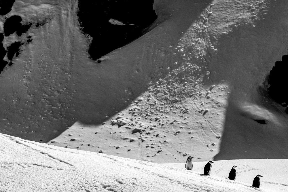 Antarcticafavs2016-49.jpg