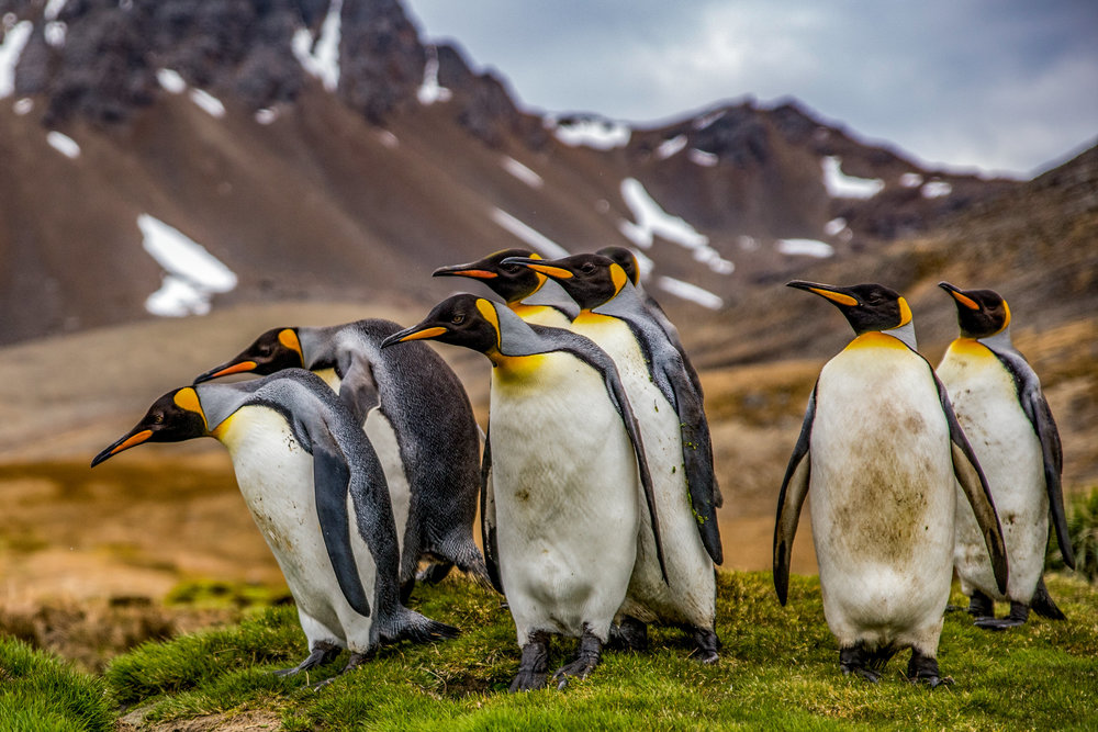 Antarcticafavs2016-179.jpg