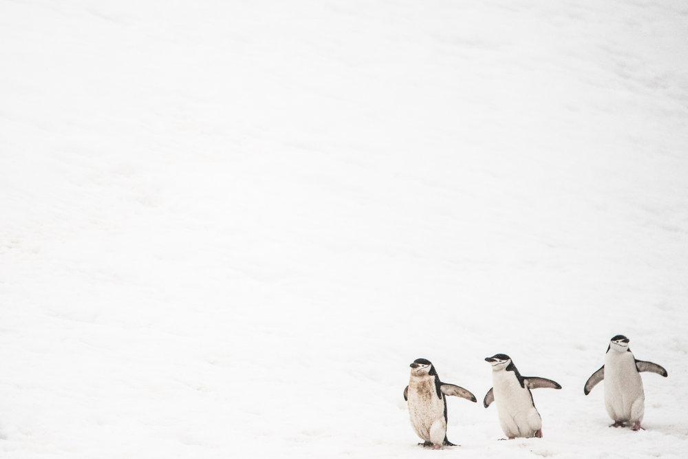 AntarcticaNovember2016-Penguins-1344.jpg
