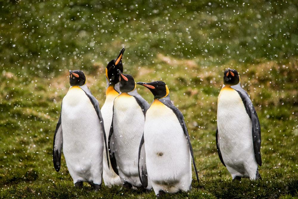 AntarcticaNovember2016-Penguins-4807.jpg