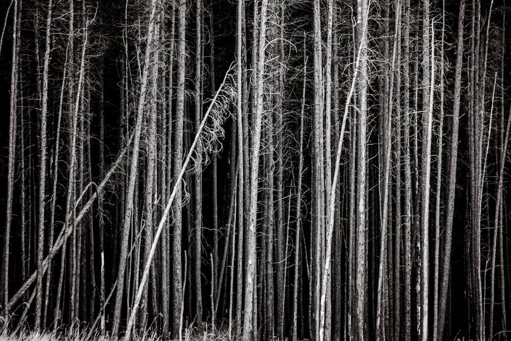 Colorado2015-KathleenHertelPhotography-131.JPG