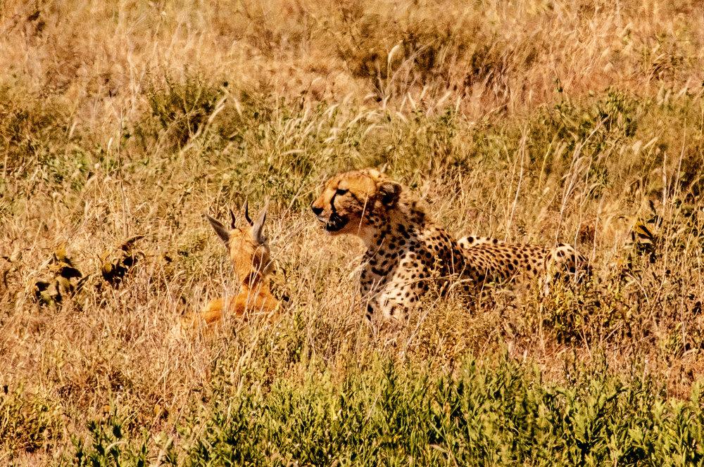 Serengeti2018-WateringHole-1.jpg