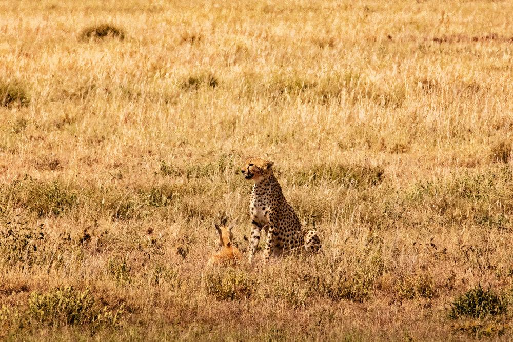 Serengeti2018-WateringHole-2.jpg