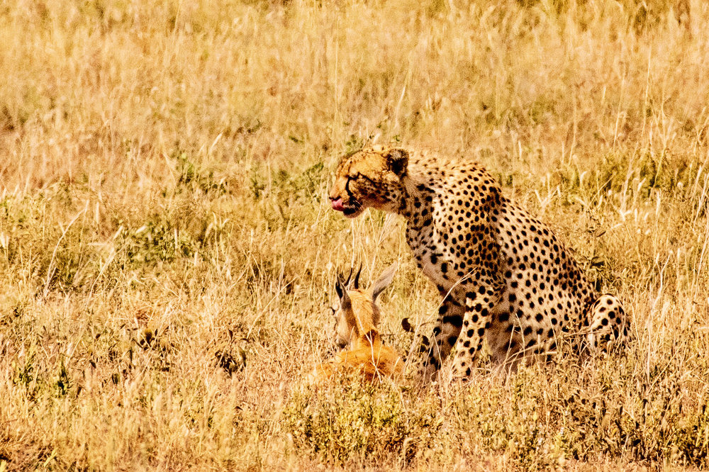 Serengeti2018-WateringHole-3.jpg
