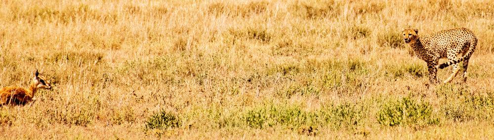 Serengeti2018-WateringHole-5.jpg