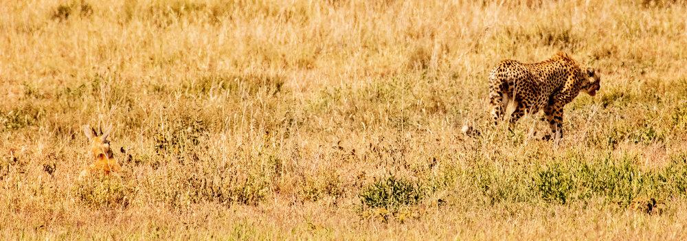Serengeti2018-WateringHole-4.jpg