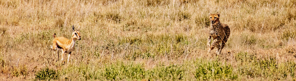 Serengeti2018-WateringHole-7.jpg