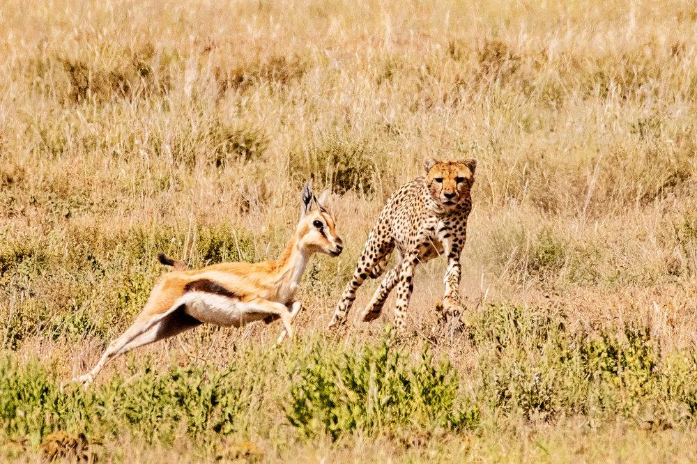 Serengeti2018-WateringHole-8.jpg