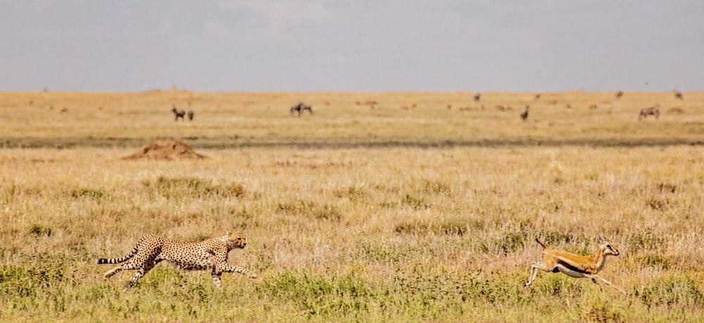 Serengeti2018-WateringHole-12.jpg