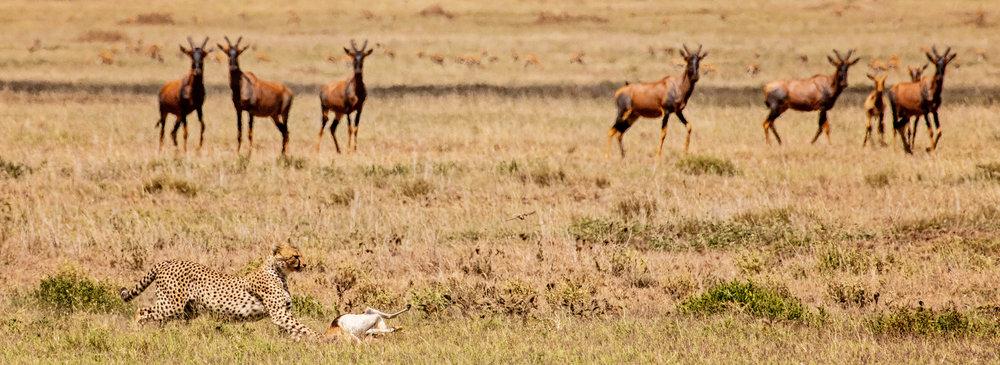 Serengeti2018-WateringHole-15.jpg