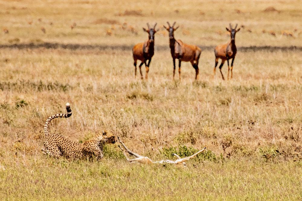 Serengeti2018-WateringHole-14.jpg