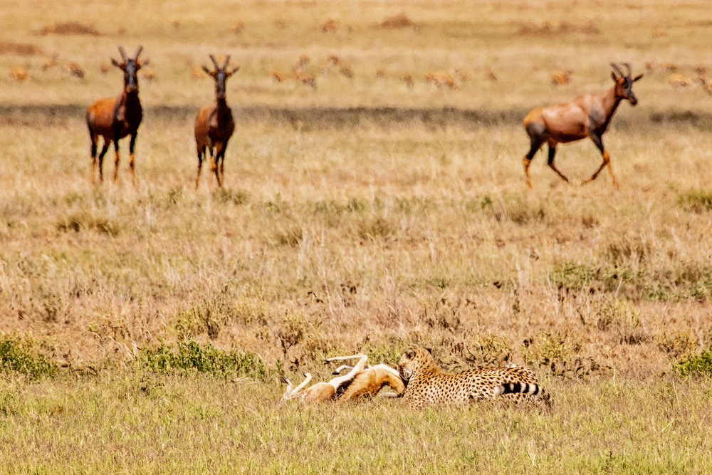 Serengeti2018-WateringHole-17.jpg