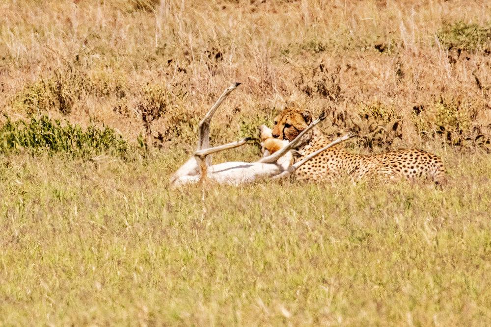 Serengeti2018-WateringHole-18.jpg