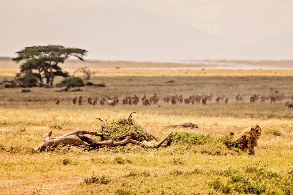 Serengeti2018-WateringHole-11.jpg