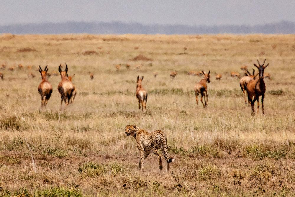 Serengeti2018-WateringHole-21.jpg