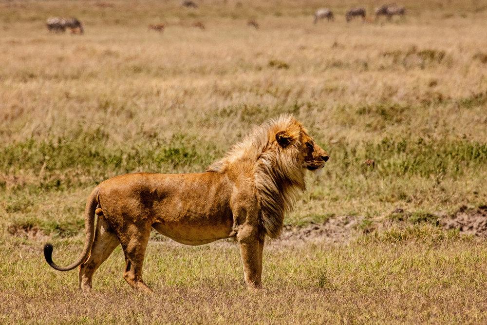 Serengeti2018-WateringHole-22.jpg