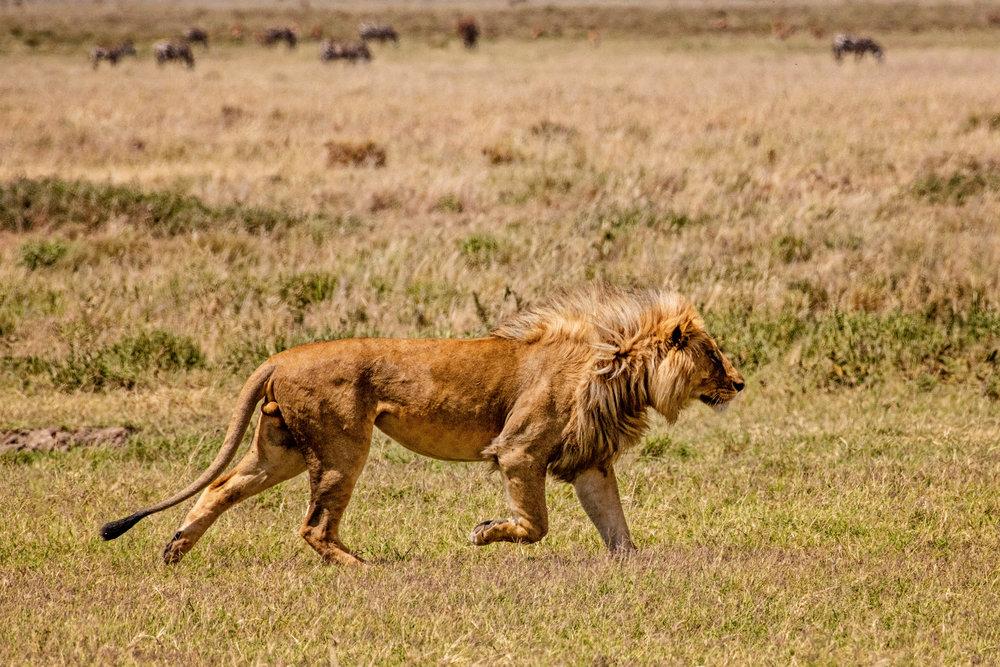 Serengeti2018-WateringHole-24.jpg