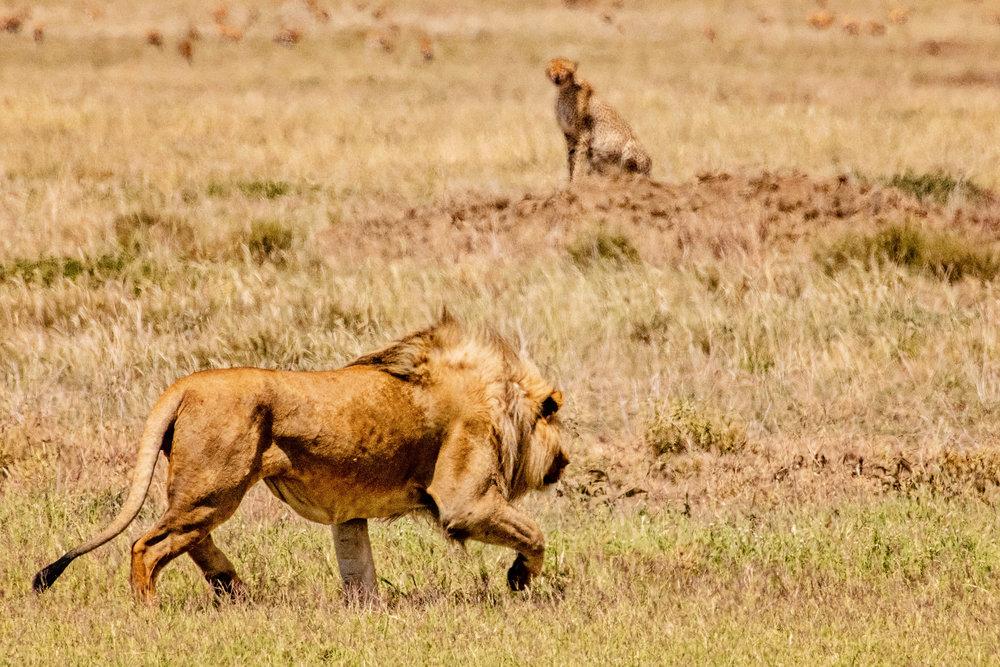 Serengeti2018-WateringHole-25.jpg