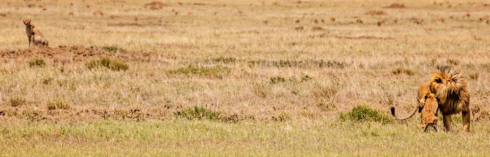 Serengeti2018-WateringHole-29.jpg