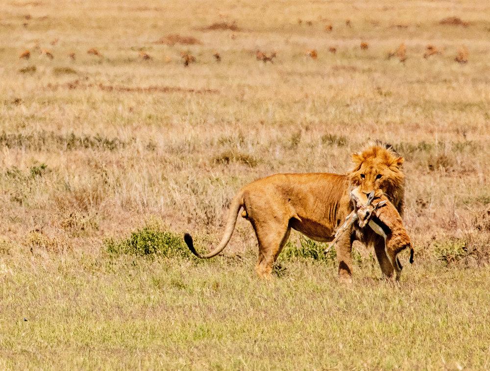 Serengeti2018-WateringHole-28.jpg