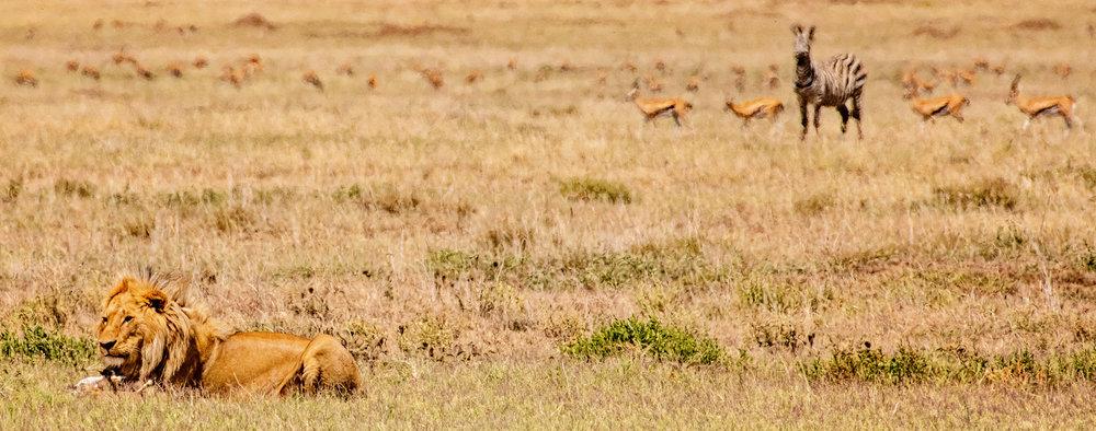 Serengeti2018-WateringHole-31.jpg