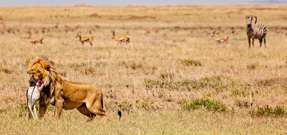 Serengeti2018-WateringHole-32.jpg