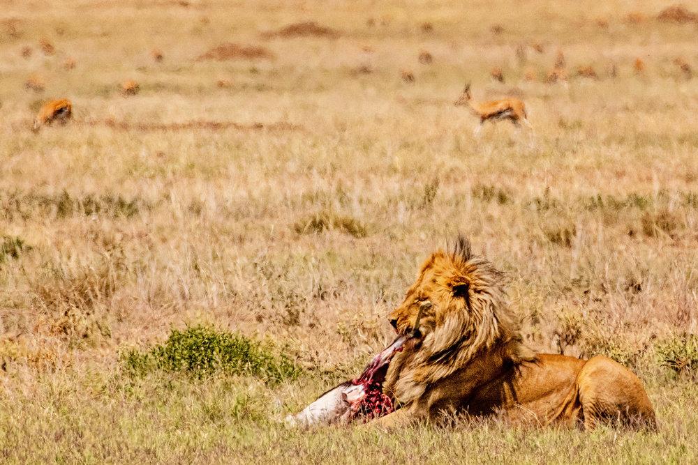 Serengeti2018-WateringHole-34.jpg