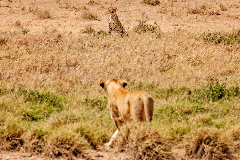 Serengeti2018-WateringHole-35.jpg