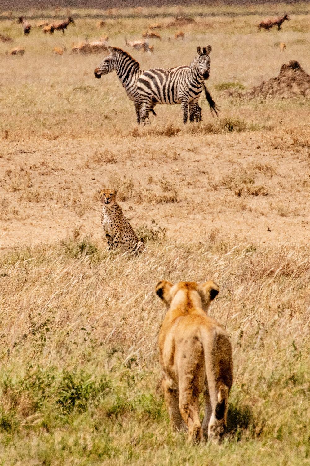 Serengeti2018-WateringHole-37.jpg
