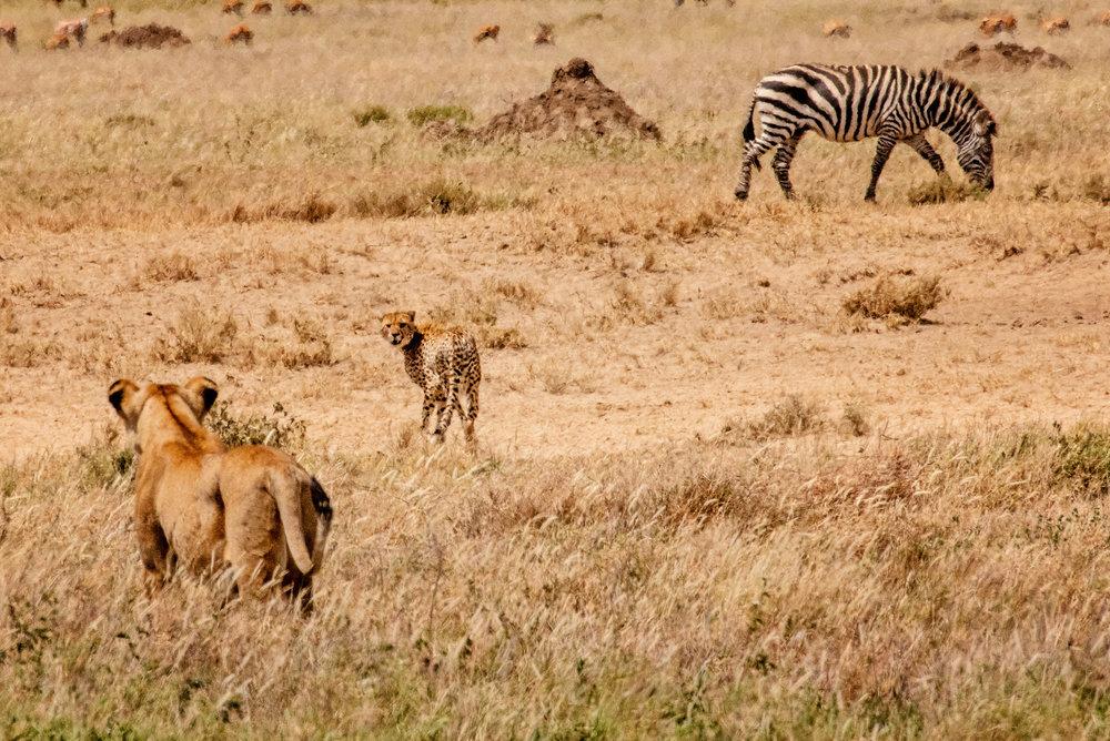 Serengeti2018-WateringHole-39.jpg