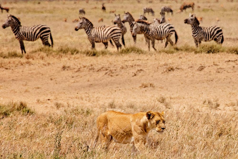 Serengeti2018-WateringHole-40.jpg