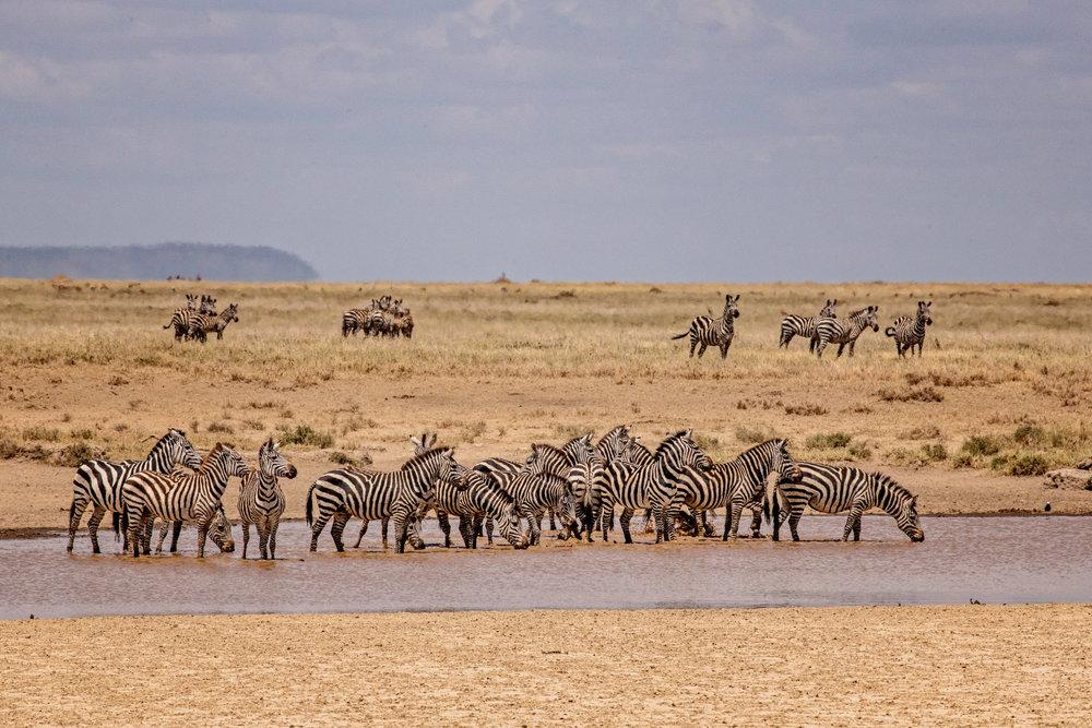 Serengeti2018-WateringHole-42.jpg