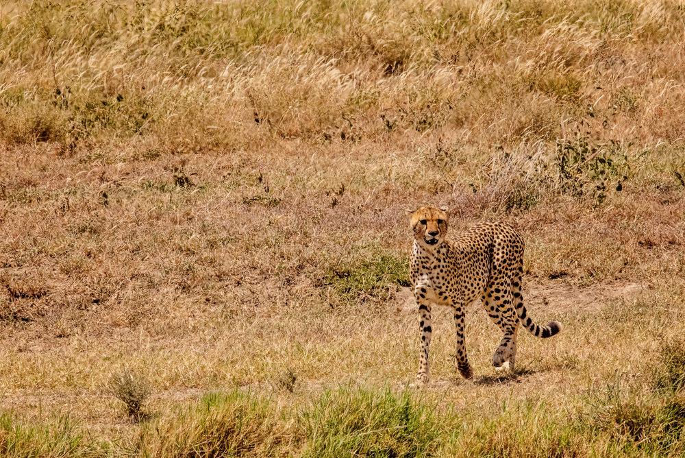 Serengeti2018-WateringHole-41.jpg