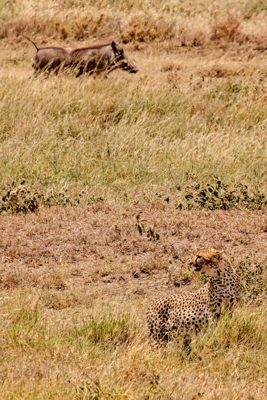 Serengeti2018-WateringHole-44.jpg