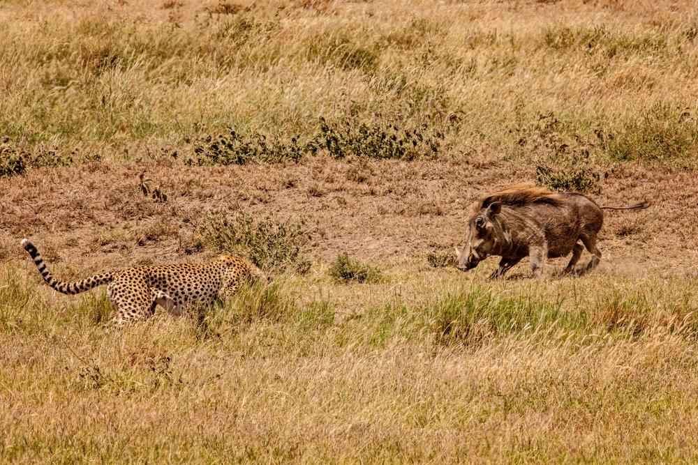 Serengeti2018-WateringHole-45.jpg