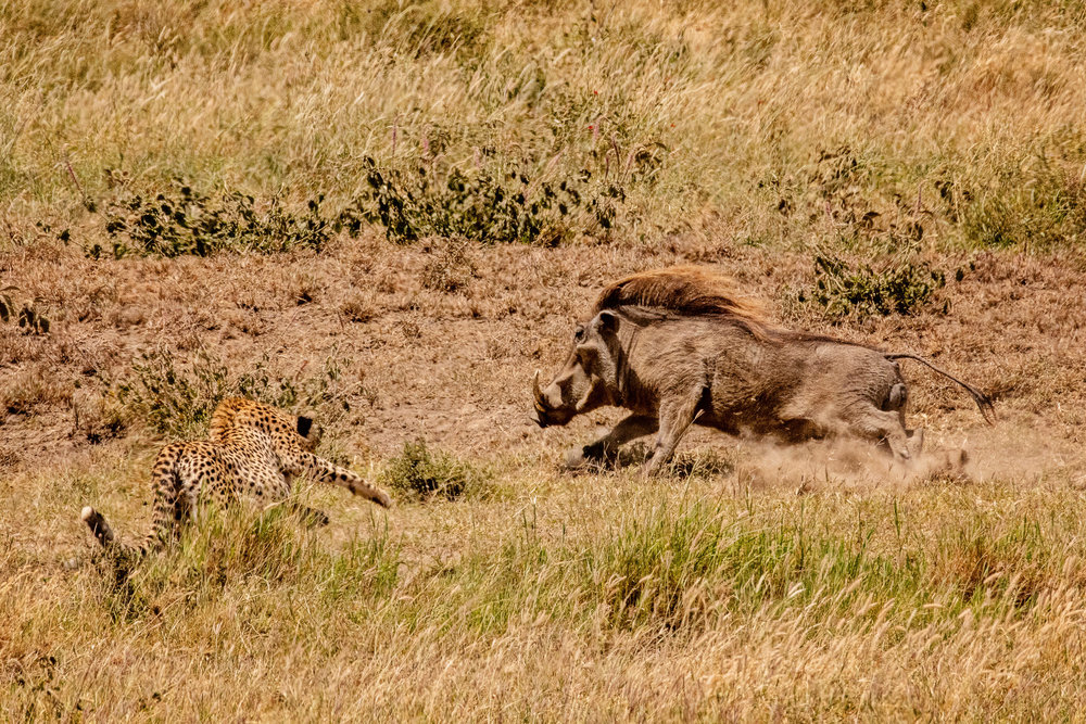 Serengeti2018-WateringHole-46.jpg