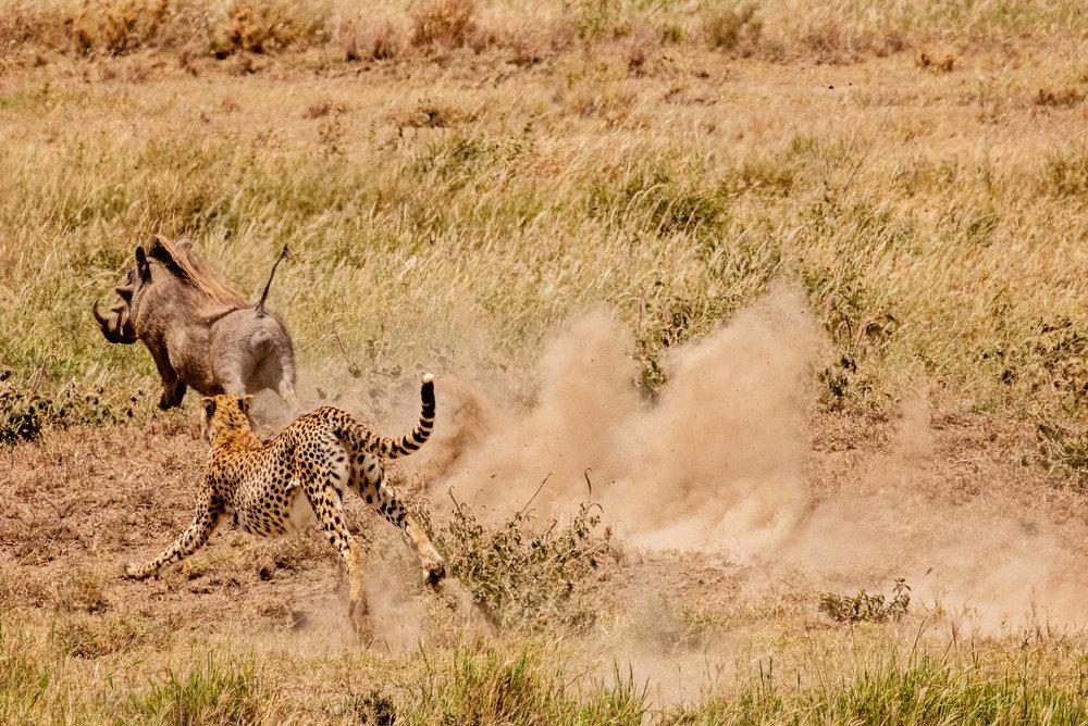 Serengeti2018-WateringHole-49.jpg
