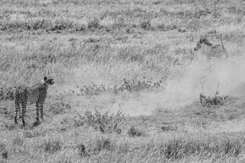 Serengeti2018-WateringHole-50.jpg