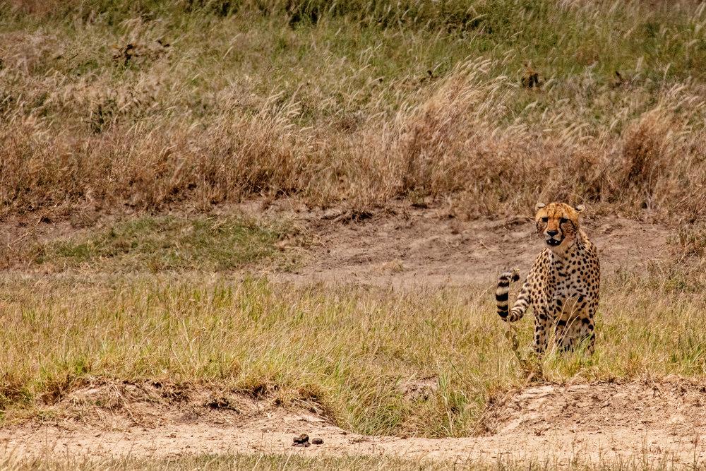 Serengeti2018-WateringHole-52.jpg