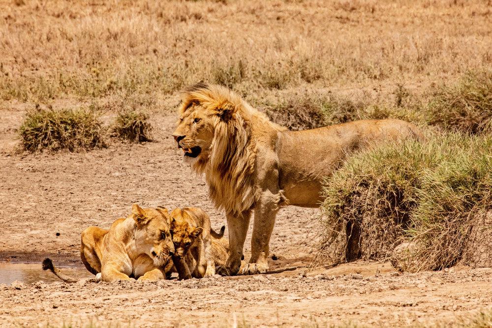 Serengeti2018-WateringHole-54.jpg