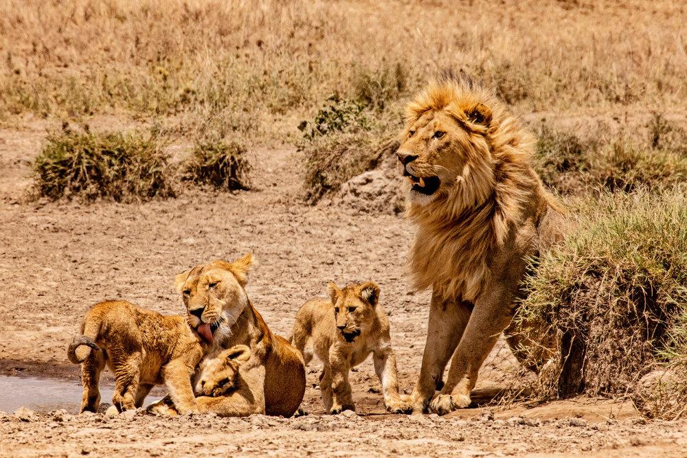 Serengeti2018-WateringHole-56.jpg